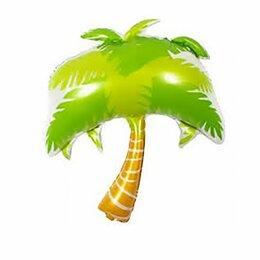 Комнатные растения - Пальма, 0