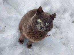 Кошки - Котик ищет добрые руки, 0