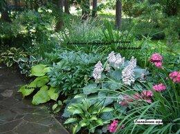 Рассада, саженцы, кустарники, деревья - Клумба № 69,готовое решение,многолетние цветы, 0