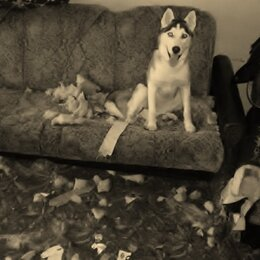 Курьеры и грузоперевозки - Вывезти старый диван на помойку, 0
