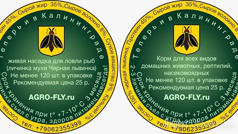 Черная львинка живой опарыш-личинка мухи  по цене 25₽ - Прочие товары для животных, фото 0