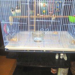 Птицы - Неразлучники парочка попугаев, вместе с клеткой, 0