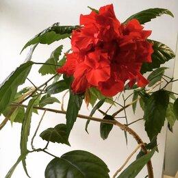 Комнатные растения - Комнатные растения в ассортименте. Москва, 0