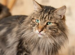 Кошки - Кот Мрамор ищет дом, 0