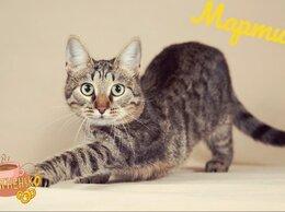 Кошки - Мартин, 0