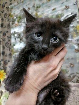 Кошки - Котенок ищет дом, 0