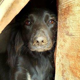 Собаки - Собака Пэтти, 0