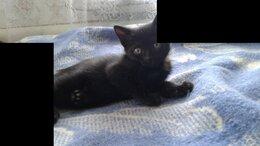 Кошки - Котята в отвественные руки, 0