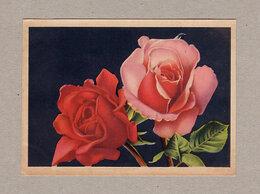 Открытки - Розы. Октообер, 1957, чистая, Таллин, цветы,…, 0