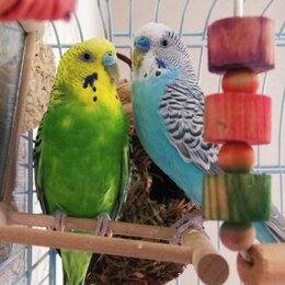 Услуги для животных - Зоогостиница, Домашняя Передержка, Гостиница для попугаев и грызунов, 0