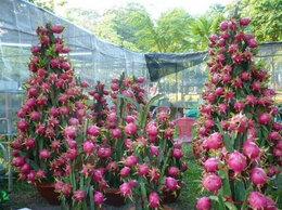 Комнатные растения - Драконов фрукт и другая экзотика для сада, 0