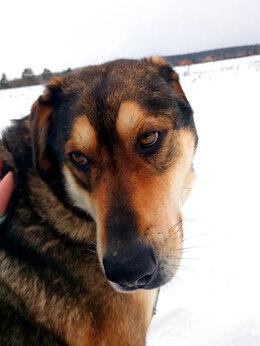 Собаки - Спокойный Бруно, 5-6 лет , 0