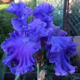 Рассада, саженцы, кустарники, деревья - Цветы многолетние, 0