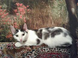 Кошки - Молодой кастрированный кот, 0