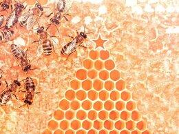 Сельскохозяйственные животные - Пчелопакеты 2022 Спб и ЛО, 0