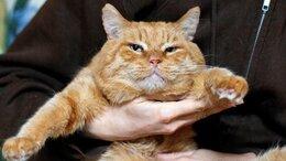 Кошки - Рыжий красавец Пабло ждёт особенную семью , 0