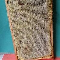 Продукты - Мед в сотах, сотовый мед,  мед в рамках. Пенза 2021г., 0