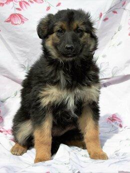 Собаки - Красивейшая Инга щенок, 0