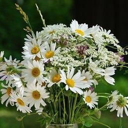 Цветы, букеты, композиции - Букеты из ромашек, 0