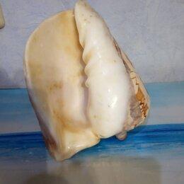 Декорации для аквариумов и террариумов - Морской Декор Раковина, 0