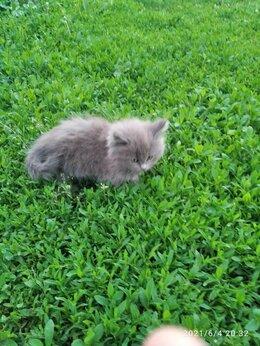 Кошки - Милые пушистики, 0