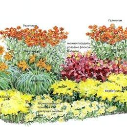 Рассада, саженцы, кустарники, деревья - Клумба многолетних цветов № 14,красиво и оригинально, 0