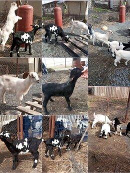 Сельскохозяйственные животные - Козлята, 0