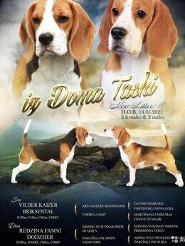Собаки - Щенки бигль, 0
