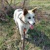 Красавица Ханна ищет самую любящую семью по цене даром - Собаки, фото 6