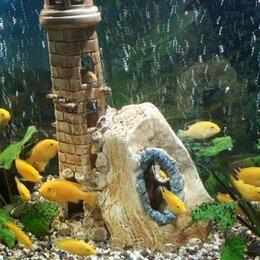 Аквариумные рыбки - Рыбки аквариумные , 0