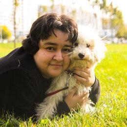 Услуги для животных - Передержка, дрессировка, выгул и груминг собак, 0