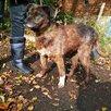 Мелкаш. Небольшая и добрая собачка ищет дом!!! по цене 5₽ - Собаки, фото 13