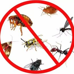 Бытовые услуги - Уничтожение тараканов клопов дезинфектор, 0