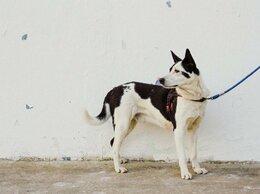 Собаки - Бывшедомашний пёс, срочно ищет дом , 0