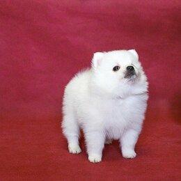 Собаки - Белоснежное  очарование  шпиц, 0