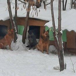Животные - Помогите пристроить собак, 0