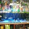 Аквасалон Водный Мир по цене 4500000₽ - Торговля, фото 9