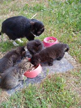 Кошки - Отдам котят. 1,5 месяца. Самостоятельные, 0