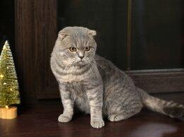 Кошки - Шикарный кот Пуфик ищет дом , 0