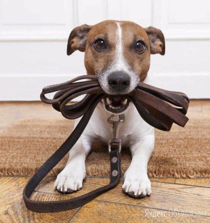 Выгул собак  по цене не указана - Услуги для животных, фото 0