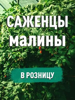 Рассада, саженцы, кустарники, деревья - Саженцы малины. 2х годовалые, 0