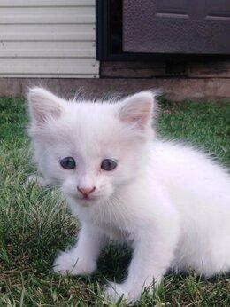 Кошки - Котенок девочка, почти 2 месяца, 0