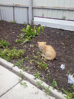 Кошки - Отдам котёнка, 0