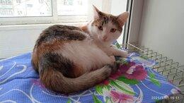 Кошки - Кошка Асенька ищет дом, 0