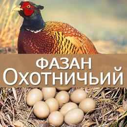 Сельскохозяйственные животные - Яйцо инкубационное фазана охотничьего и…, 0