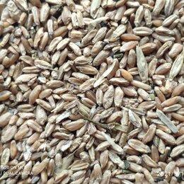 Прочие товары для животных - кормовая пшеница, 0