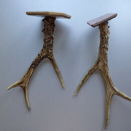 Рога, шкуры, чучела животных - Рога косули., 0