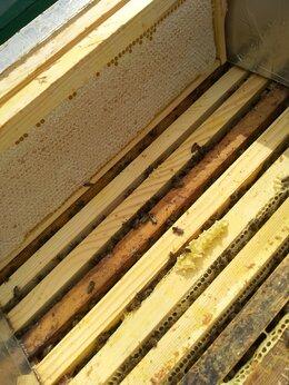 Сельскохозяйственные животные - Продаю пчелопакеты -пчелосемьи, 0