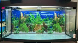 Аквариумы, террариумы, тумбы - Панорамный аквариум 350 литров., 0