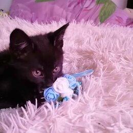 Кошки - Котенок бесплатно , 0